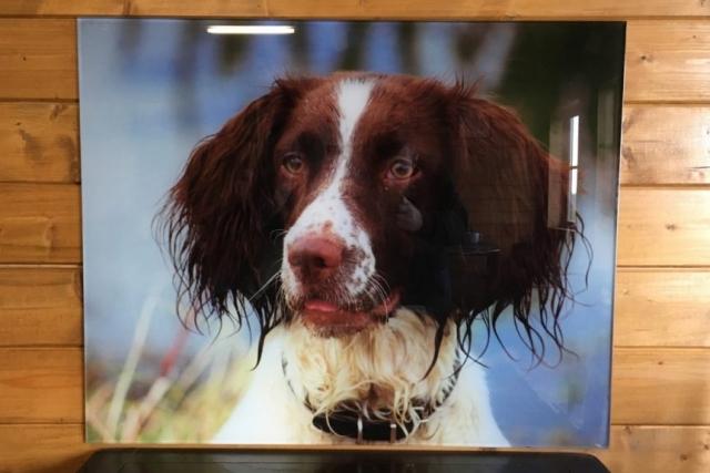 Printed Dog Onto Glass Sign