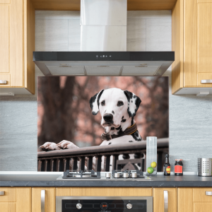 Dalmatian Glass Splashback