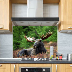 Moose Glass Splashback