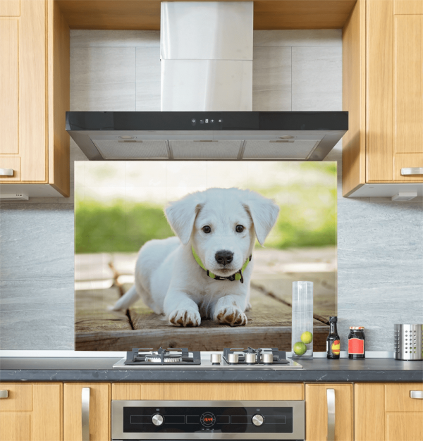 Puppy Glass Splashback