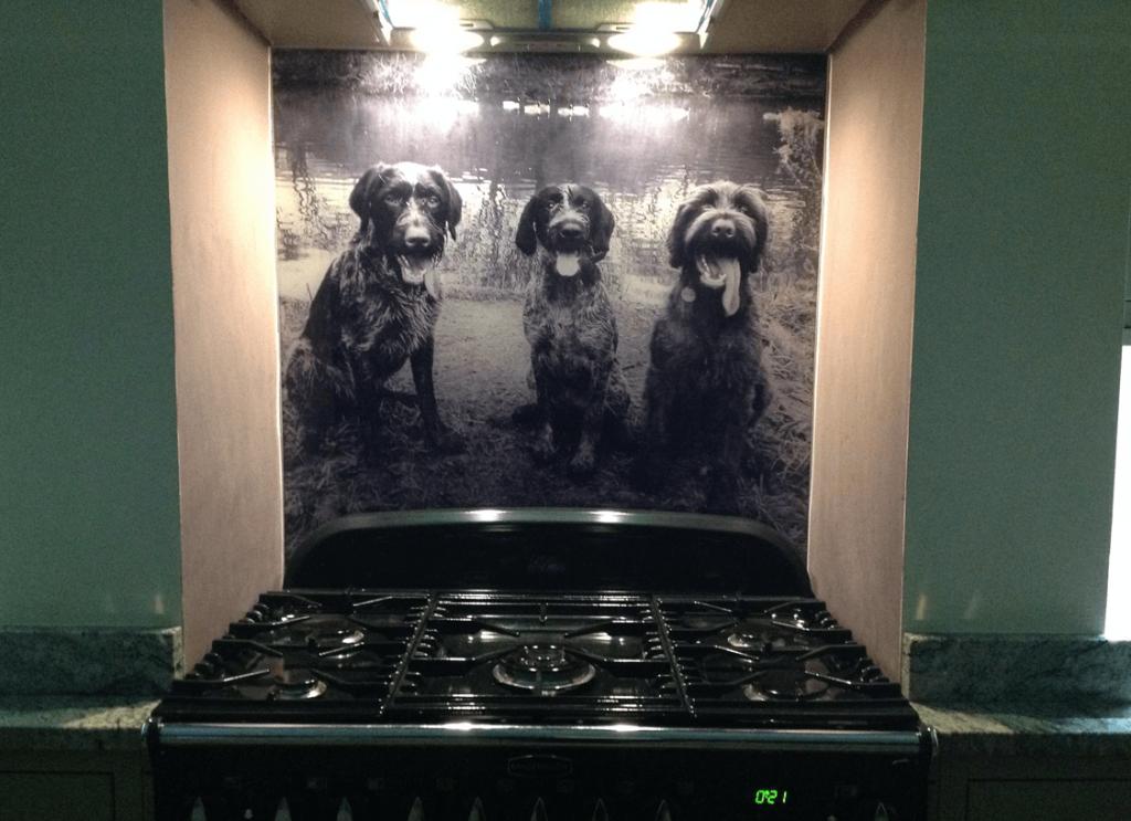 Trio of Dogs Printed Glass Splashback Glass Splashbacks